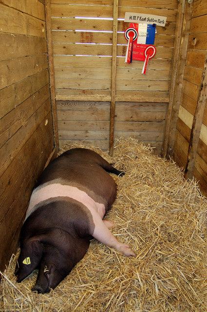Prize porker