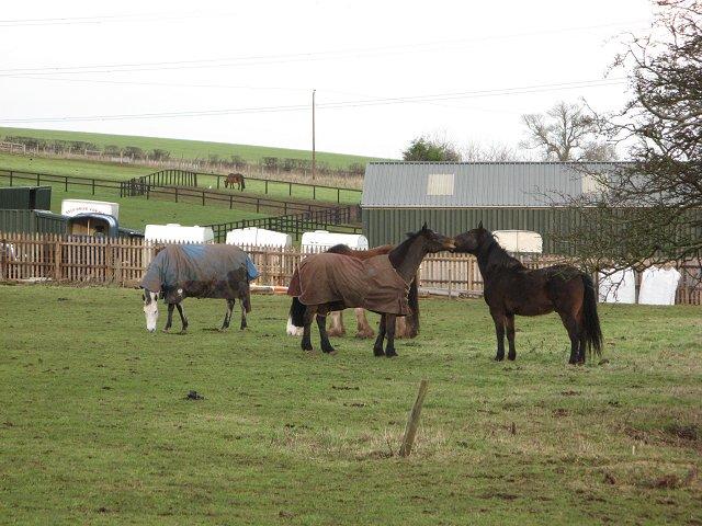 Horses, Cairnbank
