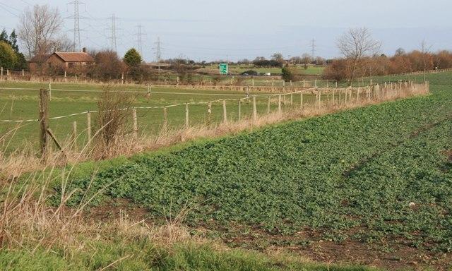Field Off Sandy Lane