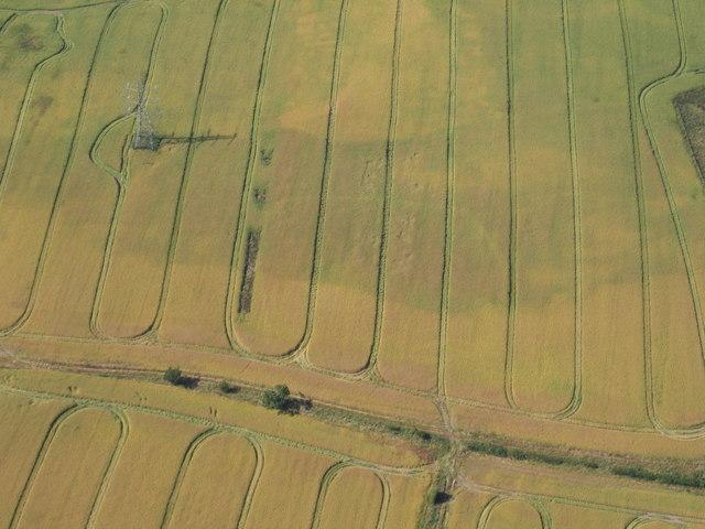Ripening crops near Grindon
