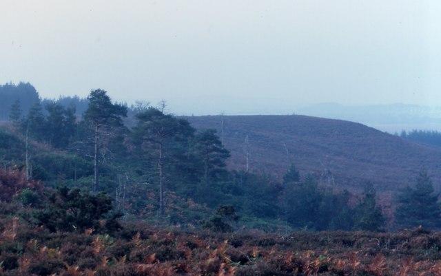 Heathland from Falcon Hill
