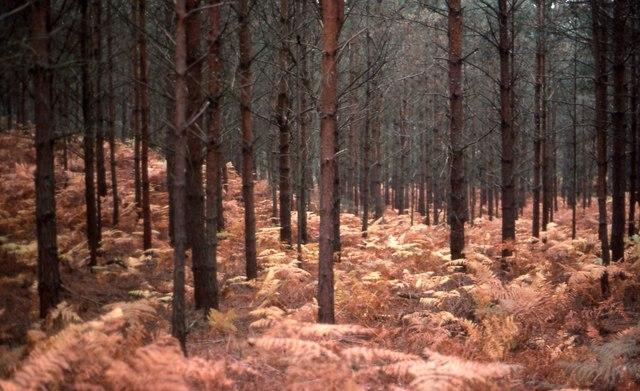 Arne trees