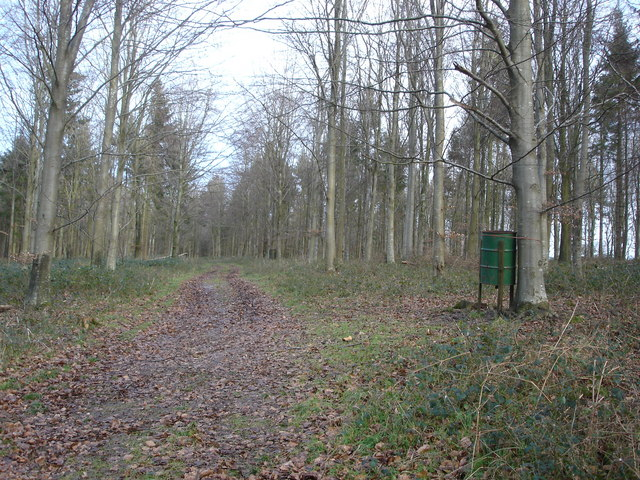 Track through Ashmore Wood