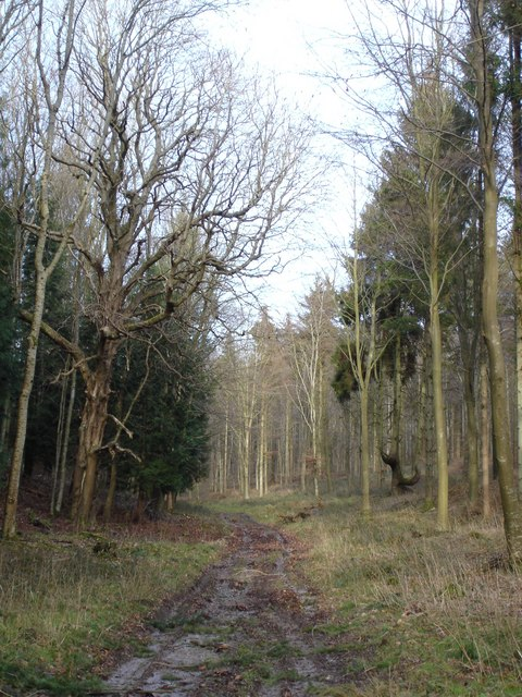 Inside Ashmore Wood