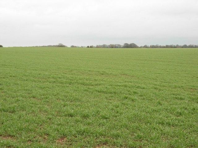 Near Emmerson Plantation