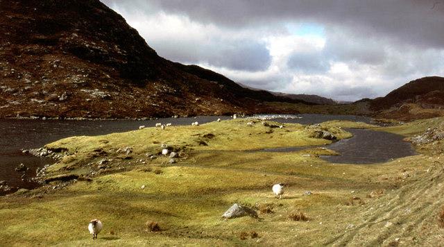 Sheep grazing above Loch Mor