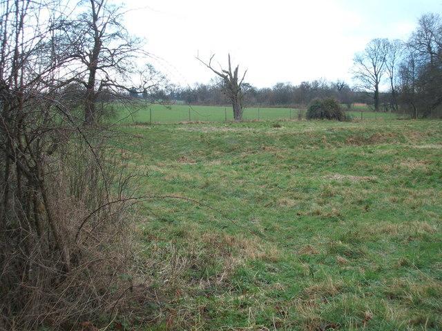 Pasture north of Swaffham Prior