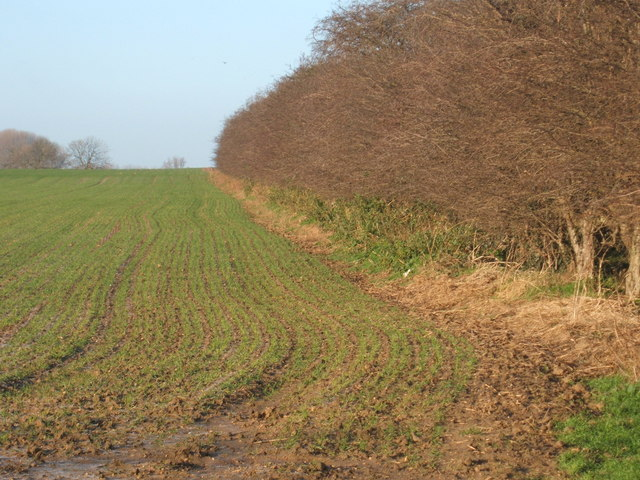 Hedgerow & arable field north of Upware