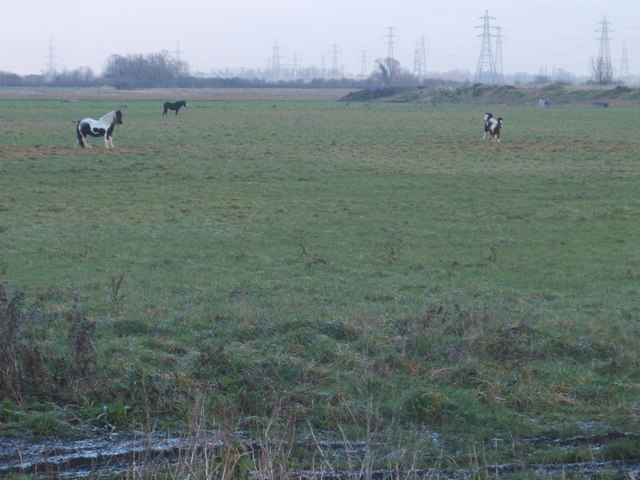 Traveller's ponies on Tubney Fen, recently bought by the National Trust