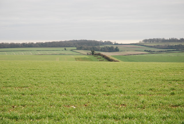 Badbury Rings point to point course