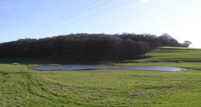 West Fell Plantation and Pond