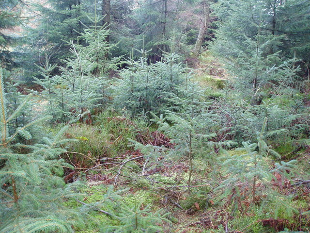 Saplings in the forest