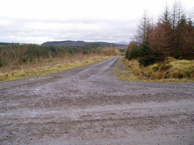 Forest road junction