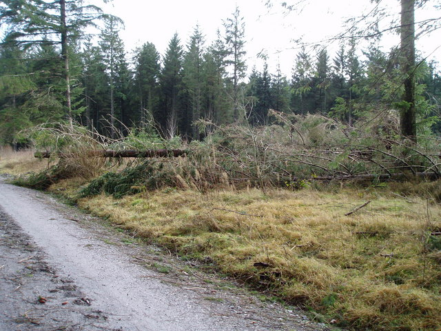 Windthrown trees in Clocaenog Forest
