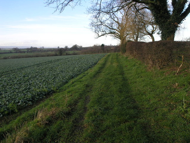 Green Field Track