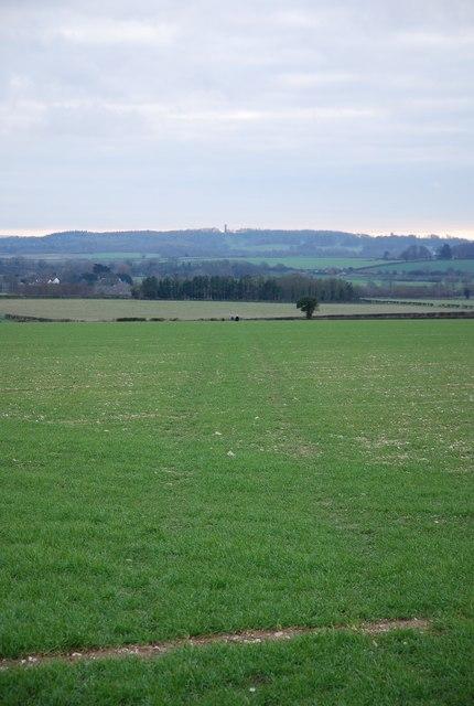Footpath towards Shapwick
