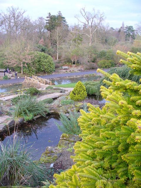 Ponds at Rock Garden, Wisley