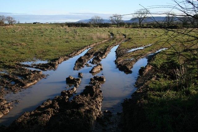 Fields East of Long Lane