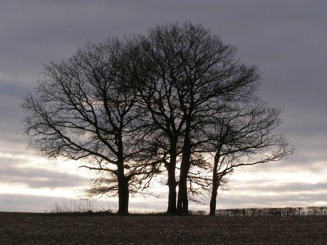 Trees, Lane End Down