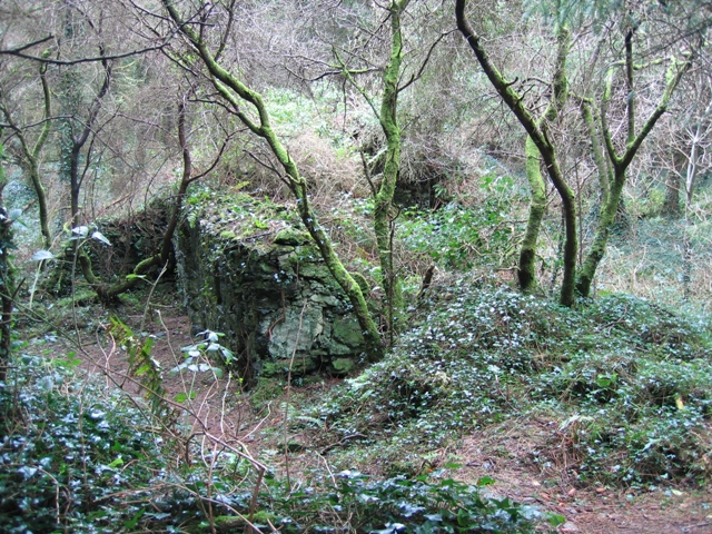 Ruined Cottage in Pentraeth Forest.
