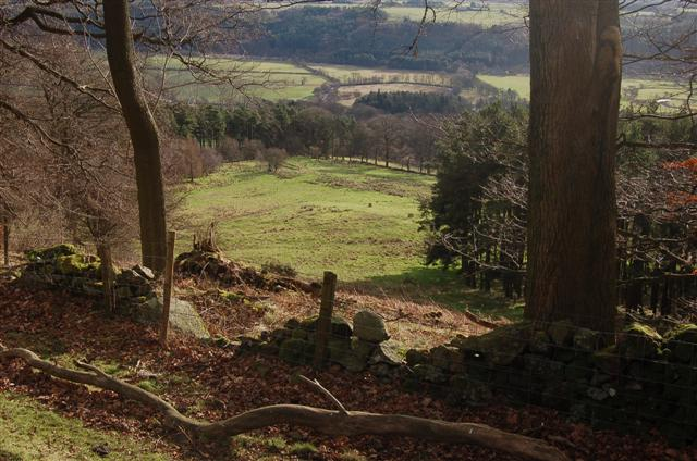 Pasture and Plantation