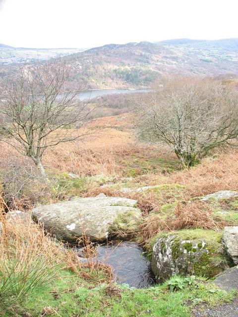 A small stream near Gallt y Celyn