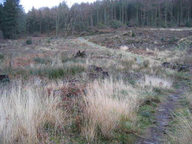 Footpath through Pentraeth Forest.