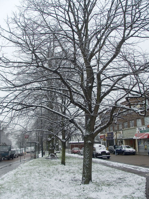 Lime Trees on Green, Bramley Parade, N14