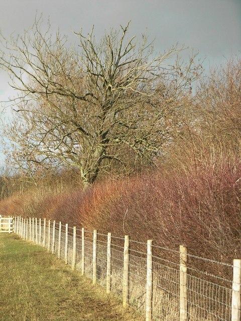 Sunlit hedge