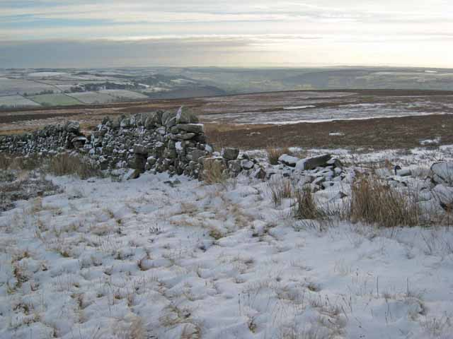 Edge of Wolsingham Park Moor