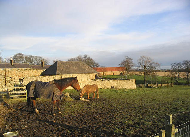 Horses at Berrington