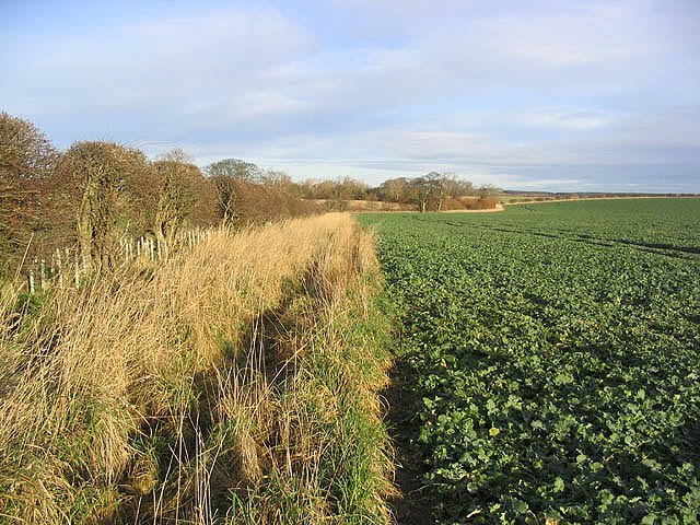 Turnip field and set aside strip