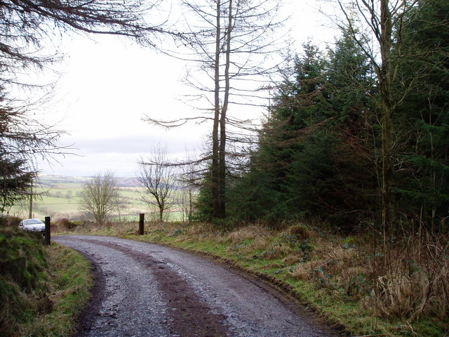 Forest Road, Clocaenog Forest.