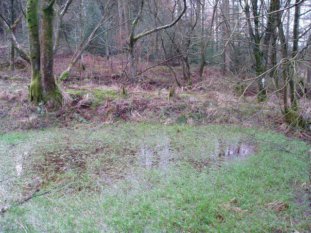 Clocaenog Forest