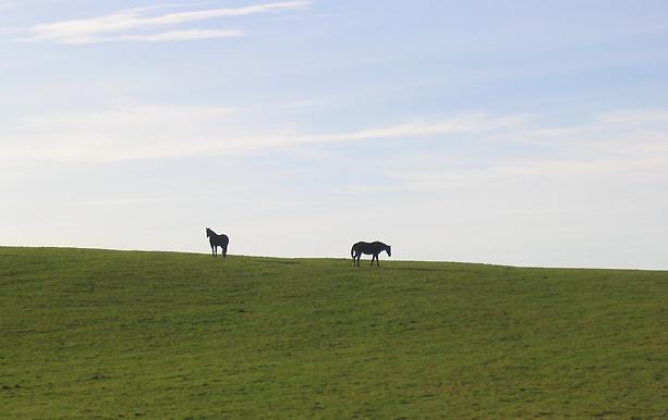 Horses on Lidderton Hill