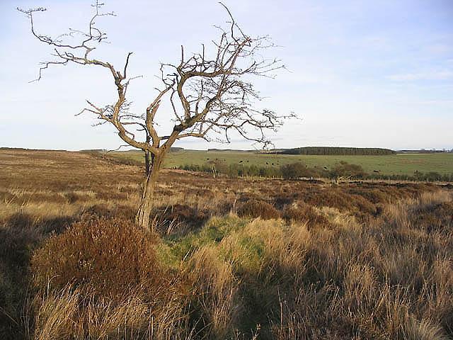 Eglingham Moor