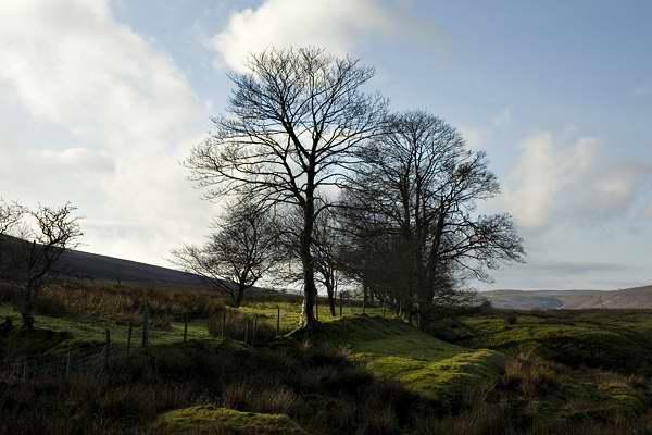 Winter trees, Black Mountain