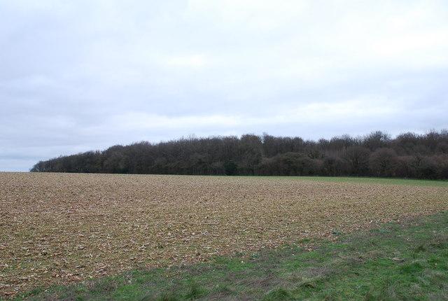 Westley Wood