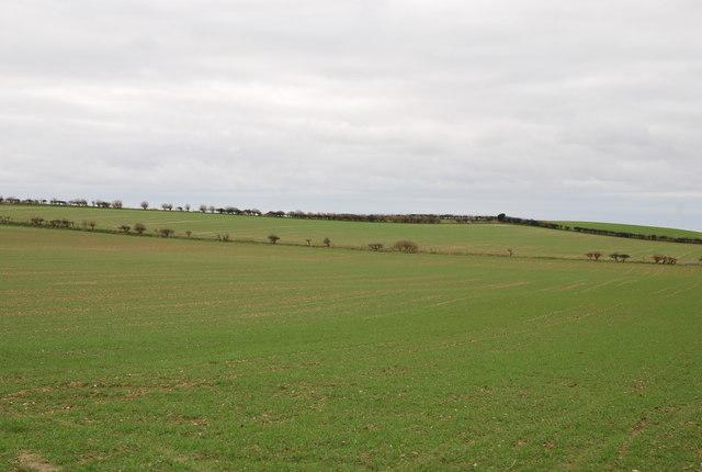 Downland from Witchampton Lane