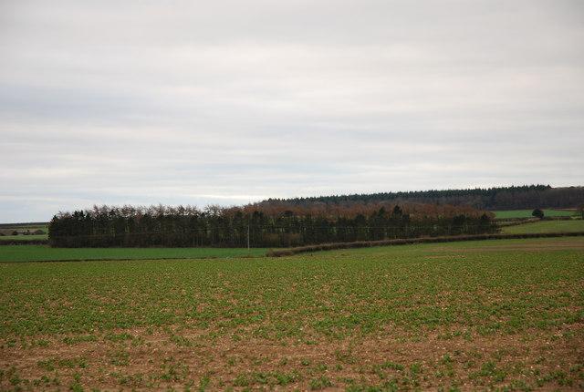 View across South Farm downland
