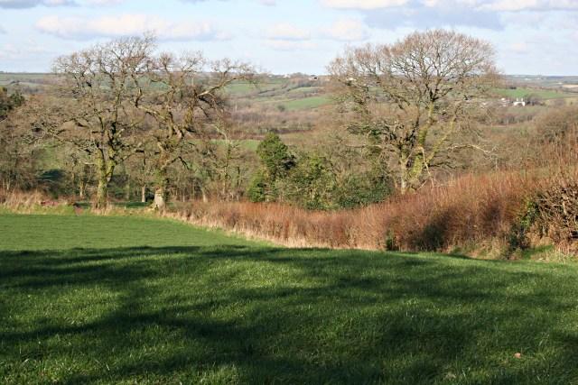 Pasture near Little Athill