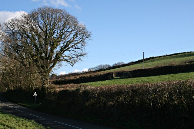 Hillside above the Road