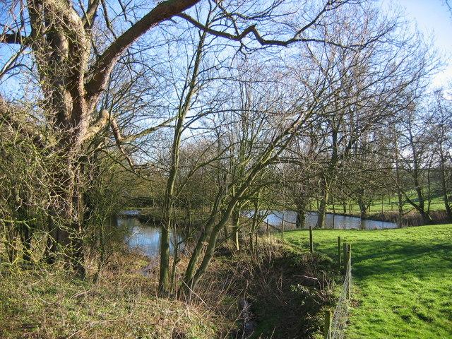 Ponds, Abbey Farm
