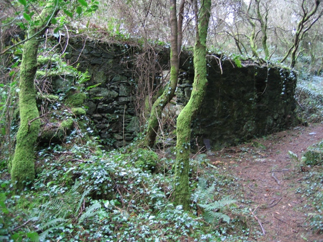 Ruined Cottage in Pentraeth Forest