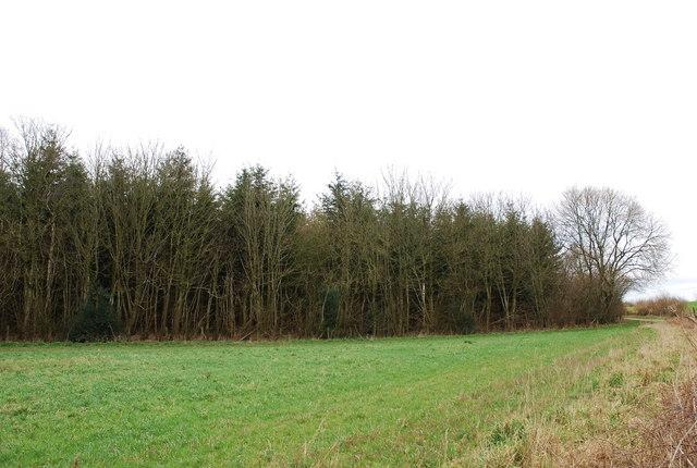 Corner of Launceston Wood