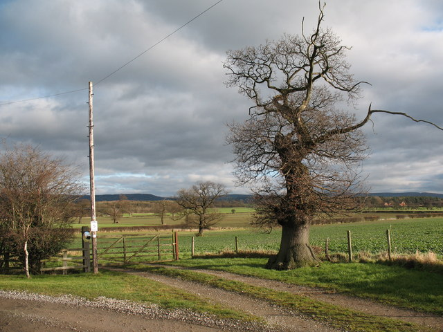 Farmland with oak trees at Abel Grange
