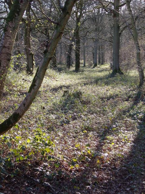 Sidley Bottom Woods