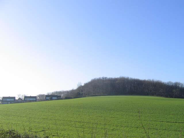 Chilton Hill Wood