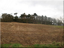 SJ6519 : Shray Hill. by Paul Beaman