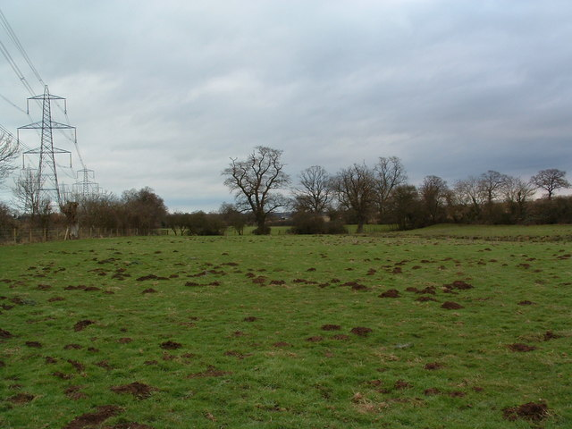 Mole Hills In Pasture Land